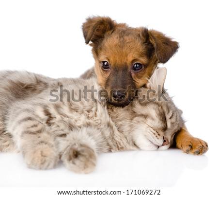 Dog and cat sleeping. isolated on white background - stock photo