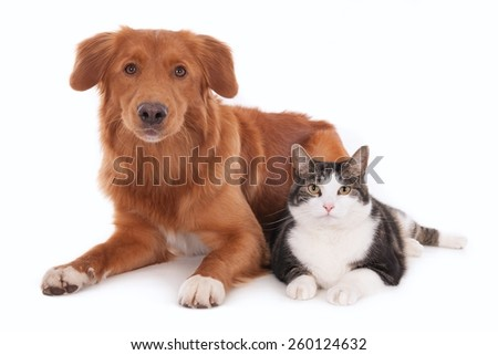 Dog and cat together, looking at camera. Isolated on white.