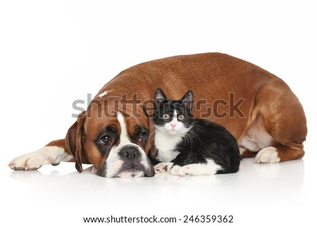 Dog and Cat together lying down on white background - stock photo