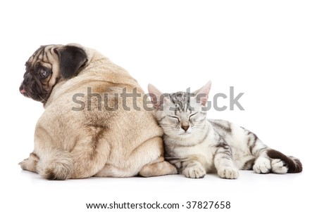 dog and cat together on white background - stock photo