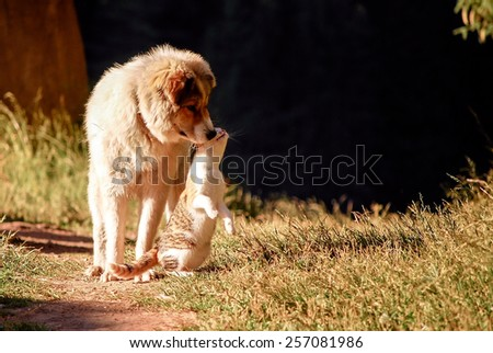 Dog and cat - unusual friends. - stock photo