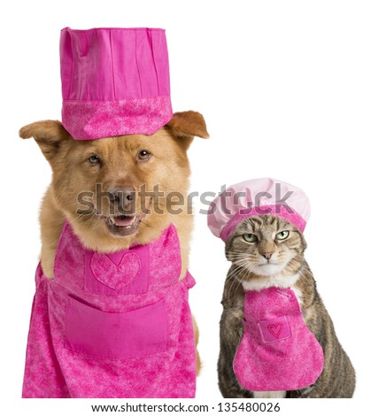 Dog and cat wearing chef hats and aprons. - stock photo