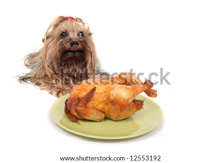dog and chicken - stock photo