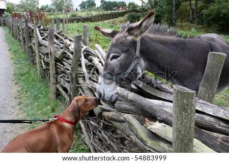 dog and donkey - stock photo