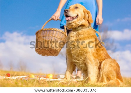 dog and girl in the meadow, picnic, Golden Retriever - stock photo