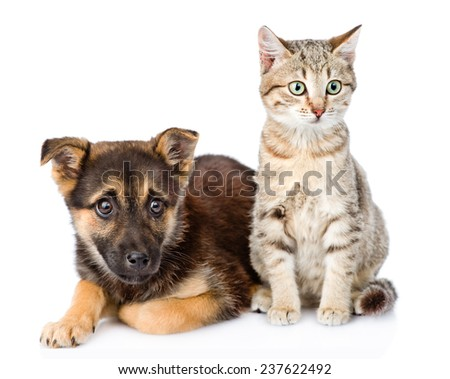 dog and kitten looking at camera. isolated on white background - stock photo