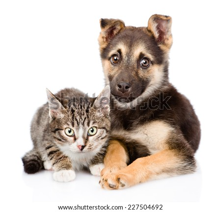 dog and kitten looking at camera together. isolated on white background - stock photo