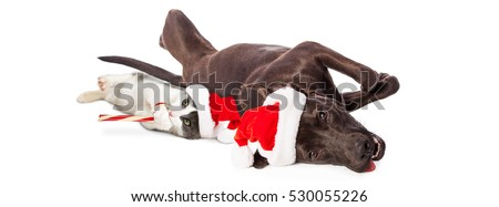 Dog and kitten wearing Christmas Santa hats lying on white background. Sized to fit popular social media banner.