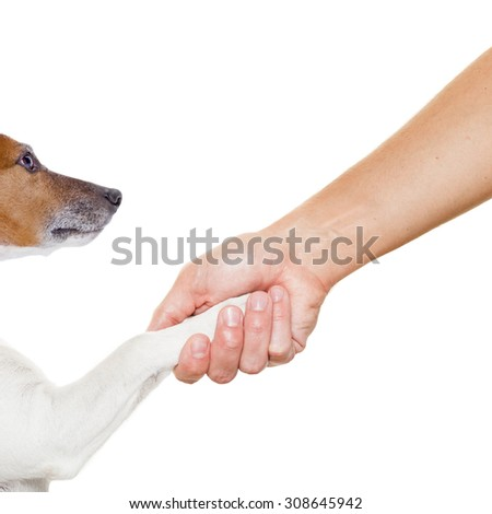 dog and owner handshaking or shaking hands  , dog with paw and looking up to owner, isolated on white background - stock photo
