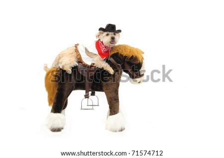 Dog and pony show includes this Silky Poo astride a stuffed horse.  She is wearing a cowboy hat, vest and red bandanna. - stock photo