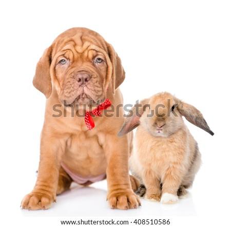 Dog and rabbit sitting together. Isolated on white background - stock photo