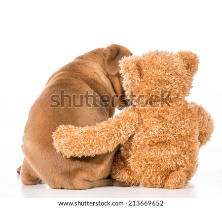 dog and teddy bear with their arms around each other - stock photo