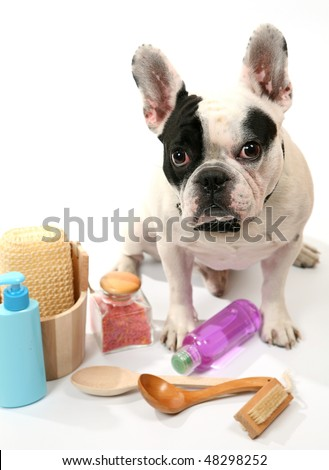 Dog and toilet accessories - stock photo