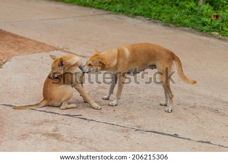Dog are checking for fleas and ticks, Thailand - stock photo