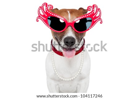 dog as drag queen