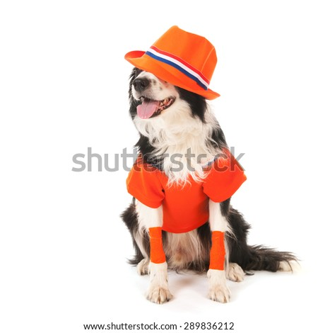 Dog as Dutch soccer fan isolated over white background - stock photo