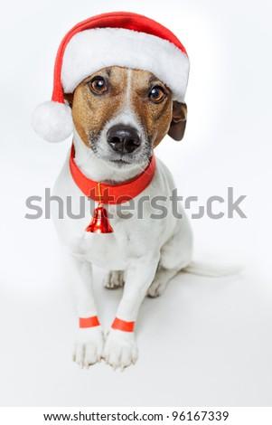 dog as santa - stock photo
