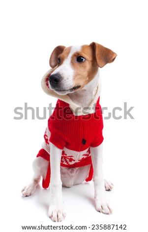 Dog as santa isolated on white - stock photo