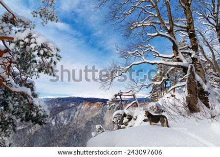 Dog at the cliff - stock photo