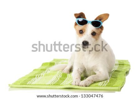 Dog at the holiday - stock photo
