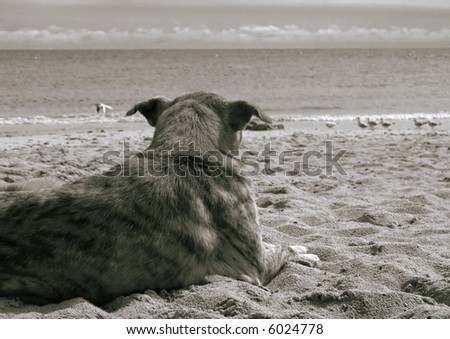 Dog at the sea, black-and-white