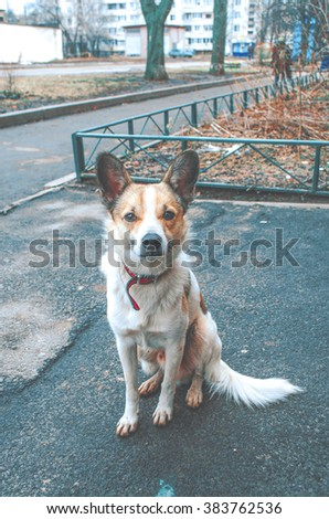 Dog at the street - stock photo
