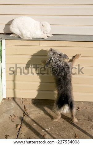 Dog attacks cat   - stock photo