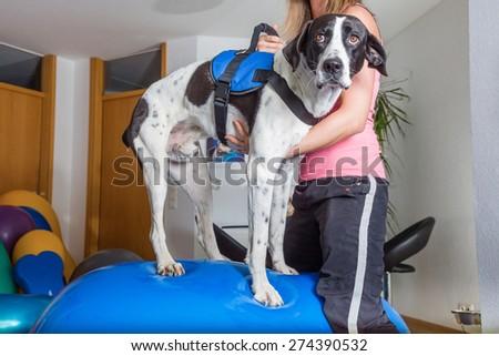 dog balancing - stock photo