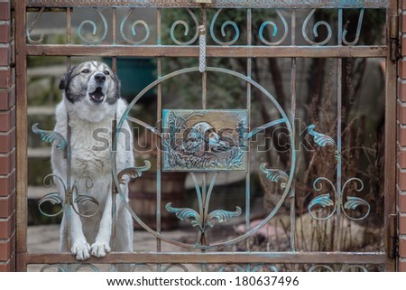 Dog barking through the fence. protects the house - stock photo
