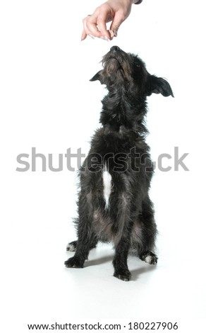 dog begging for a treat - stock photo