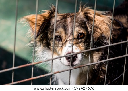 Dog behind bars - abandoned waiting for a home - stock photo