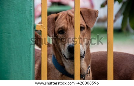 Dog behind fence
