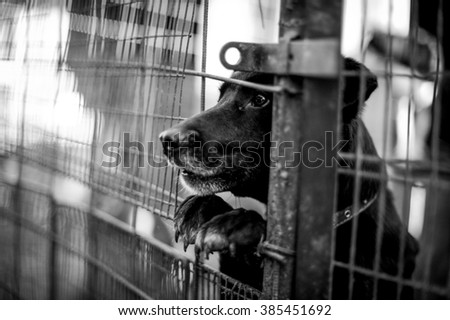 dog behind the fence in the shelter - stock photo
