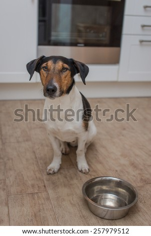 dog bowl hungry meal eating