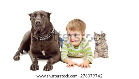 Dog breed Staffordshire Terrier, cute boy and kitten Scottish Straight together isolated on white background - stock photo
