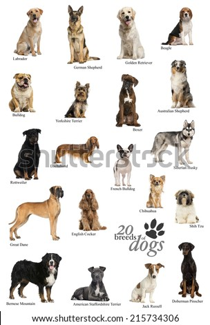 Dog breeds poster in English - stock photo