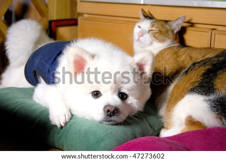 dog & cat - stock photo