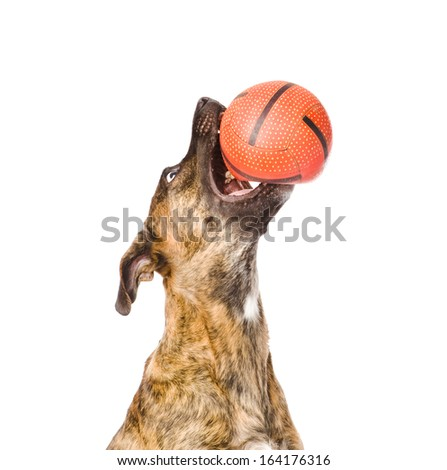Dog catching a ball. isolated on white background - stock photo