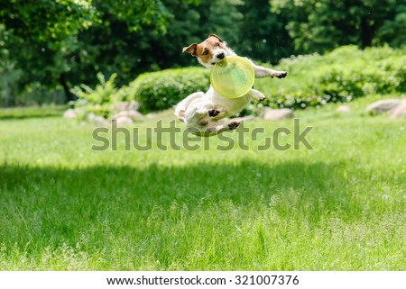Dog catching frisbee at a high jump - stock photo