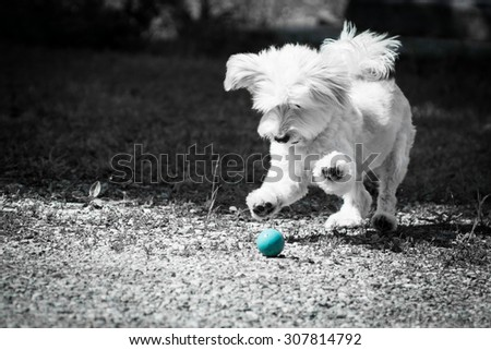 Dog catching his favourite ball. - stock photo