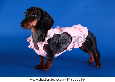 dog clothes, coveralls, dress. Pet products - stock photo