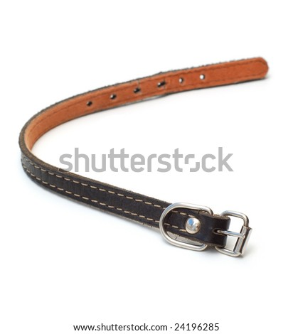 Dog collar - stock photo