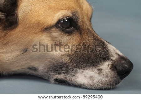 Dog Day. - stock photo