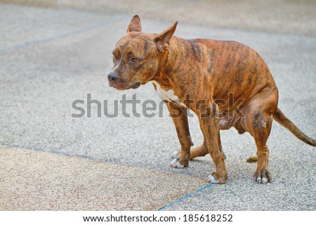 Dog defecate on the cement floor - stock photo