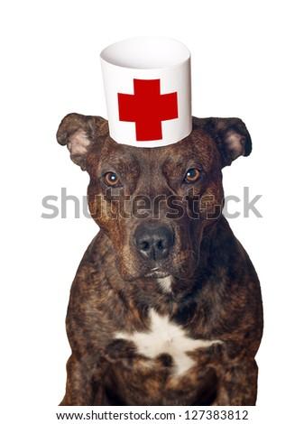 dog-doctor for examination - stock photo