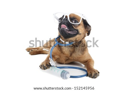 dog doctor on a white background in studio