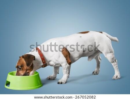 Dog. Dog listening with big ear - stock photo