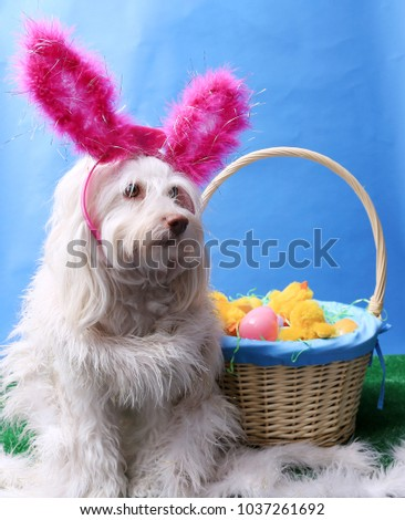 Dog. Dog with Easter Basket.