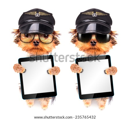 dog  dressed as pilot holding blank tablet pc - stock photo