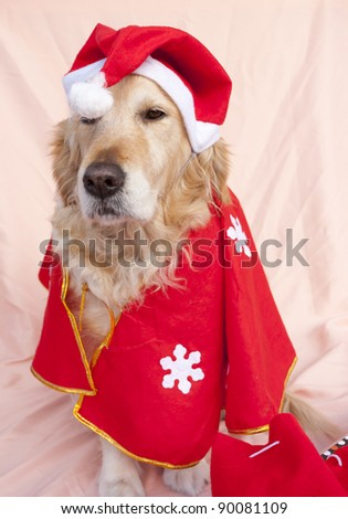 Dog dressed as Santa Claus with Christmas gifts - stock photo